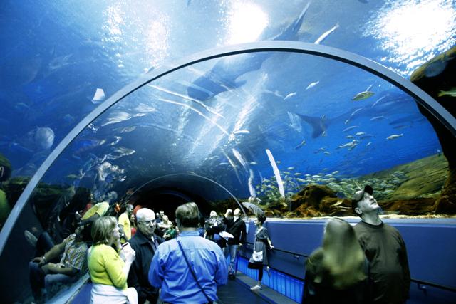 Georgia Public Aquarium : to the public. As the world?s largest aquarium, Georgia Aquarium ...